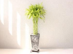 foliage-plant2