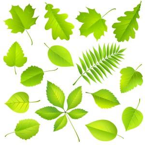 leaf-all